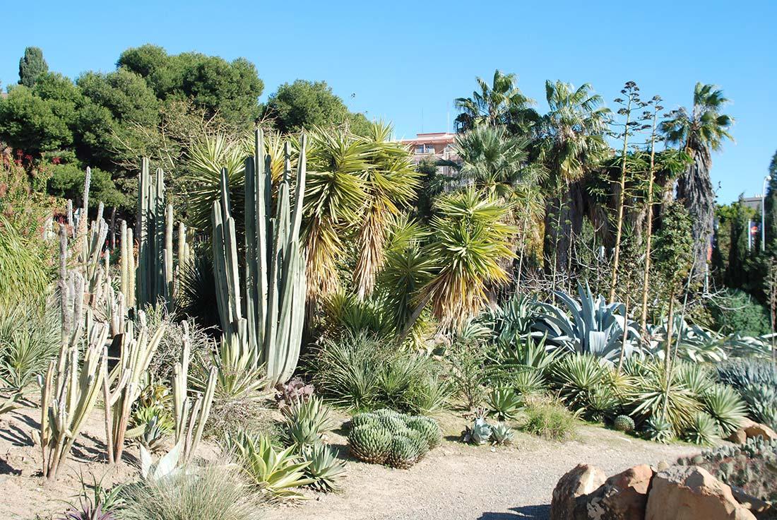 Cactus in botanic garden
